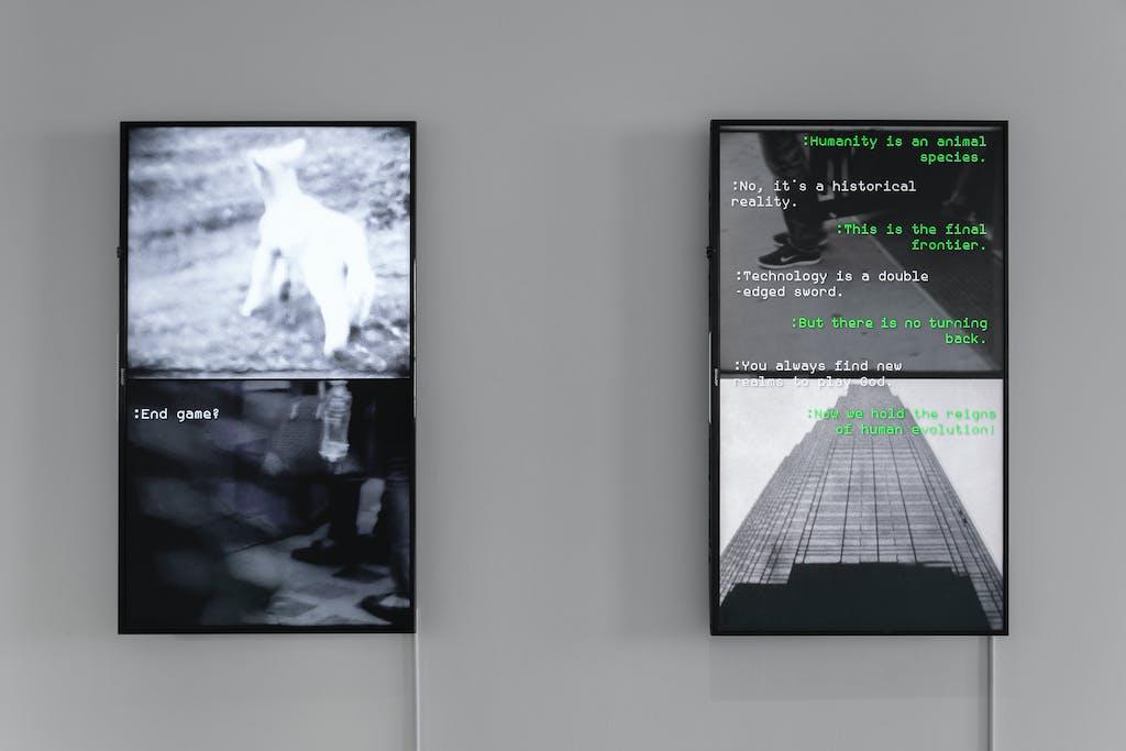 5 Stock/Gangway (chat), 2017 & 2019 - © Paris Internationale